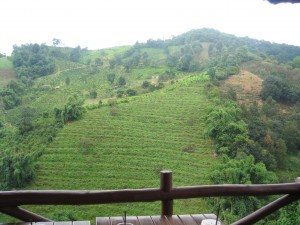 Beautiful view overlooking Sweet Mae Salong- lattes served at a fraction of the price