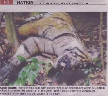 Tiger-crueldeath